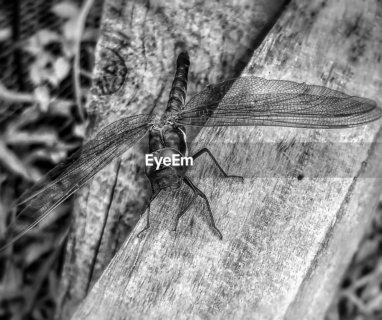 invertebrate, insect, animal themes, one animal, animal, animals in the wild, animal wildlife, close-up, wood - material, no people, day, selective focus, nature, focus on foreground, outdoors, animal wing, dragonfly, animal body part, tree, textured
