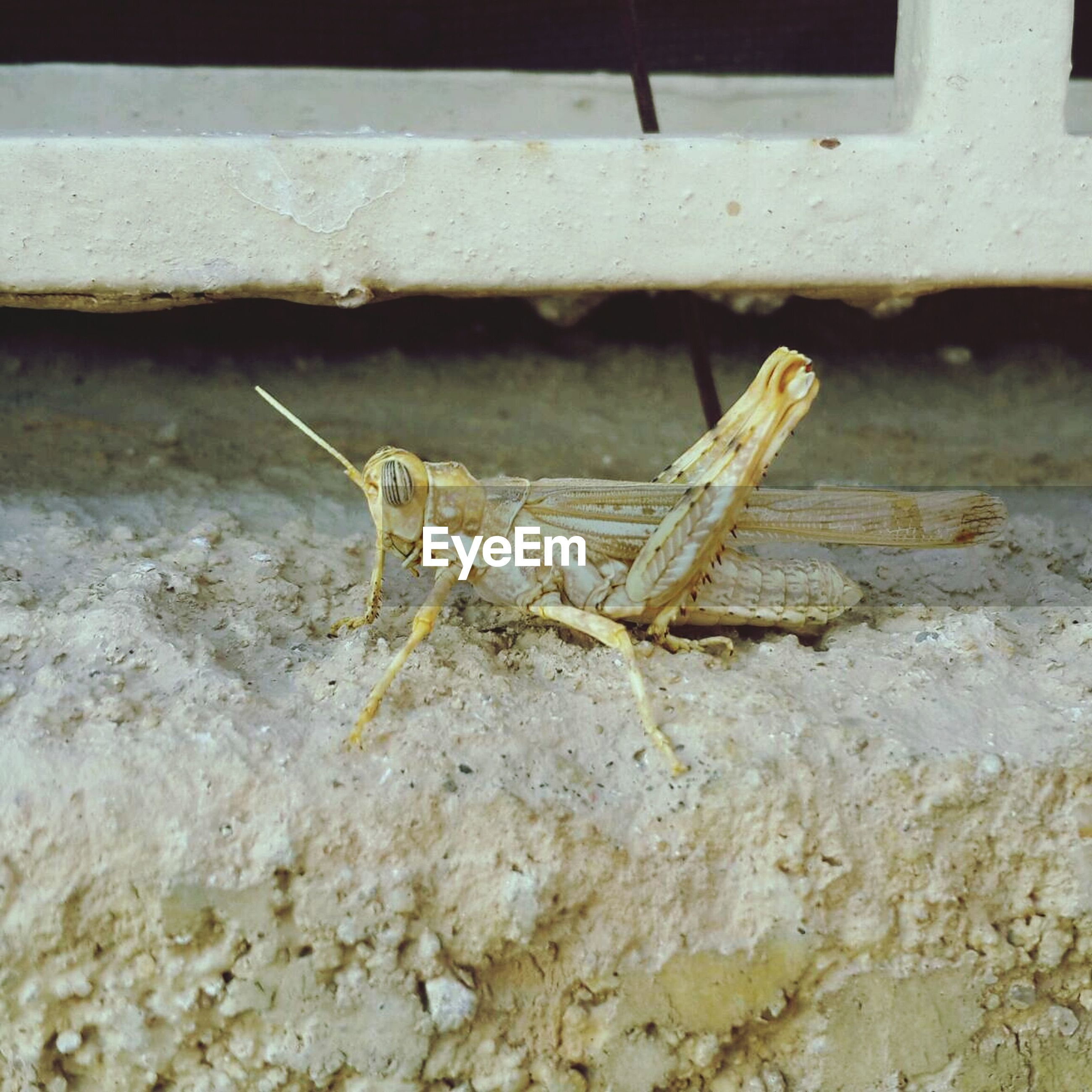 animal themes, one animal, close-up, animals in the wild, wildlife, insect, wood - material, wall - building feature, day, indoors, no people, selective focus, nature, focus on foreground, wall, high angle view, textured, sunlight, grasshopper