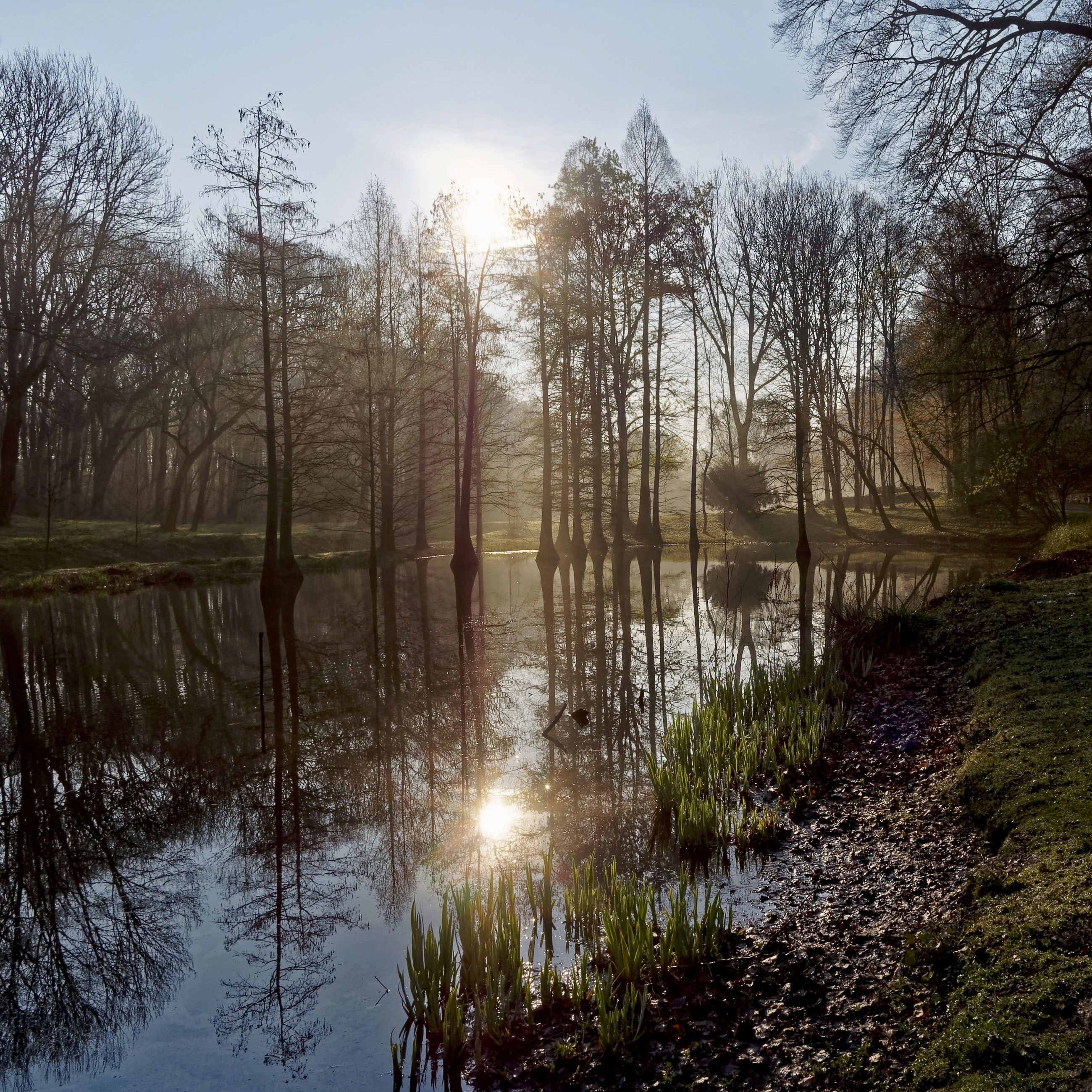 SUN SHINING THROUGH TREES IN LAKE