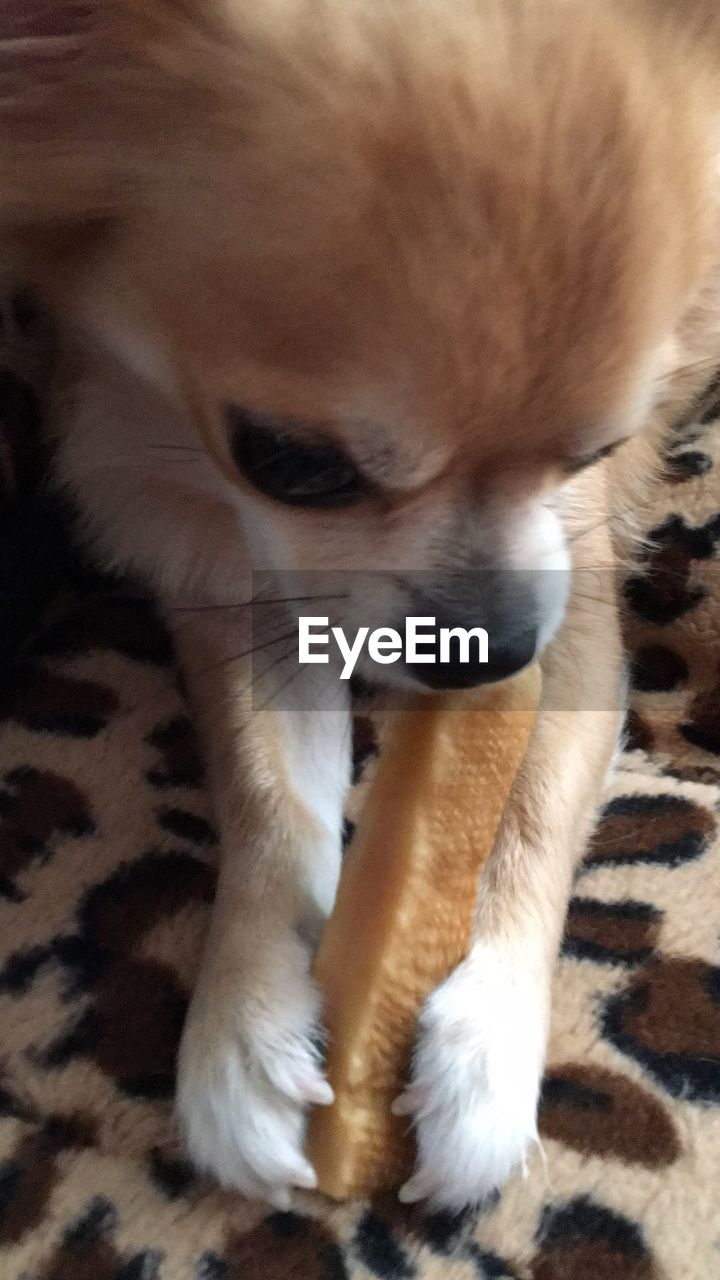 one animal, pets, animal themes, mammal, dog, domestic animals, indoors, no people, close-up, day