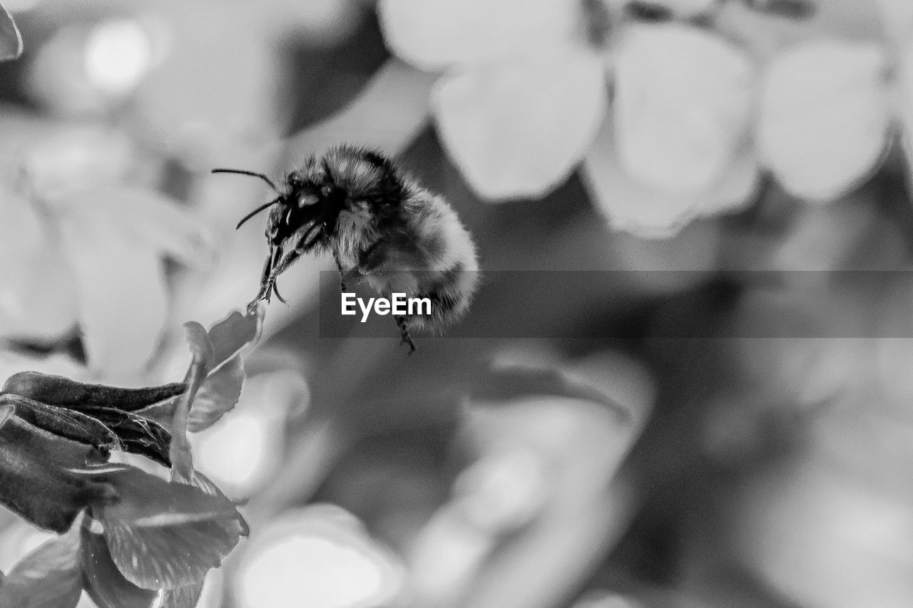 flower, flowering plant, fragility, freshness, plant, growth, beauty in nature, close-up, vulnerability, nature, focus on foreground, insect, invertebrate, no people, selective focus, day, bee, animal, animal themes, petal, outdoors, flower head, pollination, purity