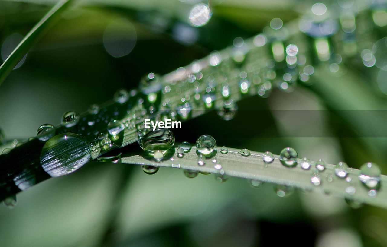 drop, water, wet, plant, close-up, green color, growth, nature, beauty in nature, selective focus, plant part, no people, leaf, freshness, fragility, focus on foreground, vulnerability, day, rain, outdoors, raindrop, blade of grass, dew, purity, rainy season