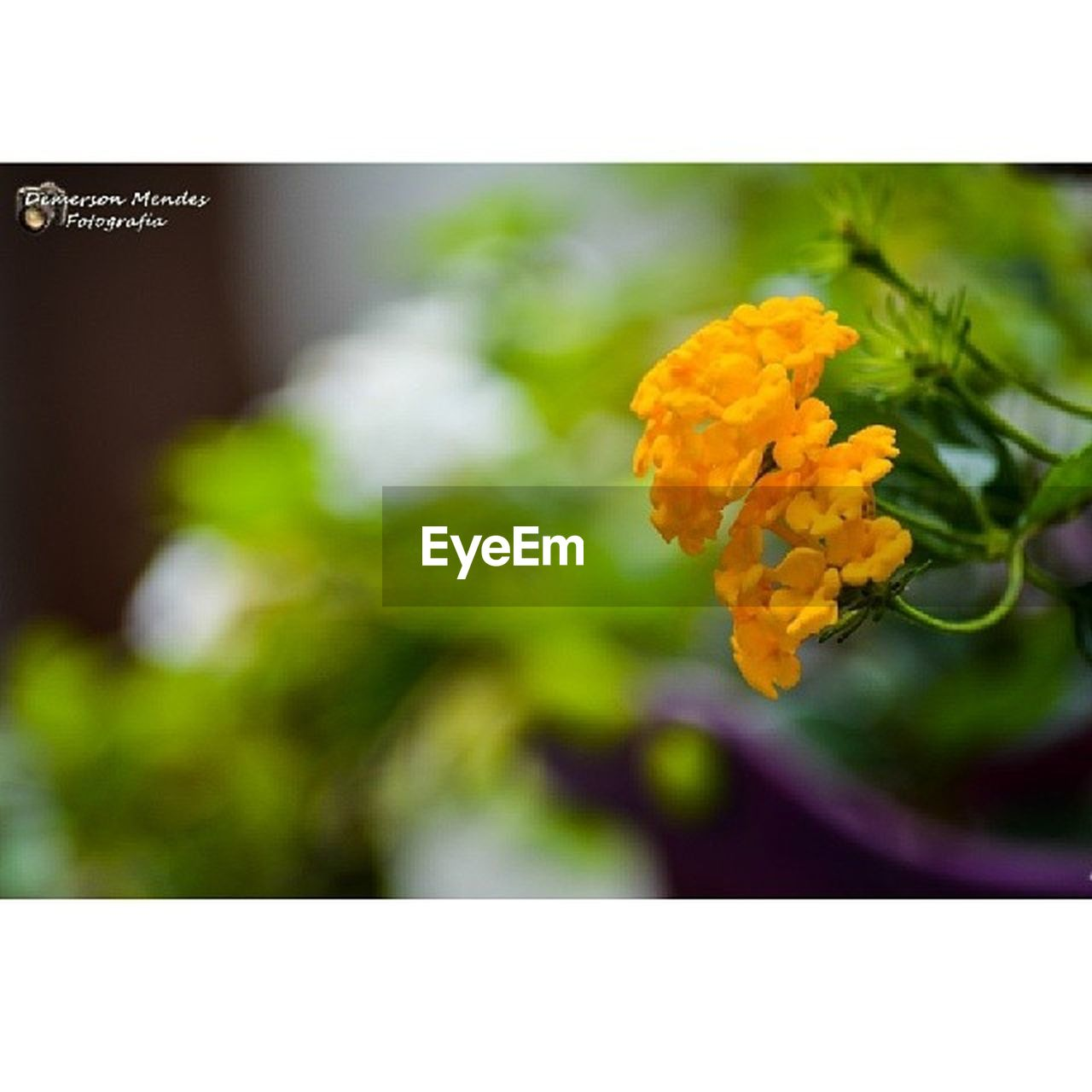 flower, auto post production filter, nature, beauty in nature, fragility, close-up, freshness, no people, focus on foreground, plant, flower head, outdoors, day, yellow