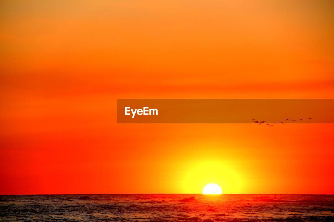 sunset, sky, orange color, beauty in nature, scenics - nature, flying, sun, sea, horizon over water, tranquil scene, horizon, idyllic, tranquility, water, bird, vertebrate, nature, no people, animal themes, outdoors