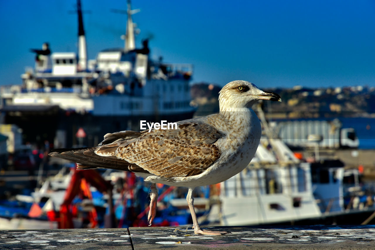 vertebrate, bird, animal themes, animal, focus on foreground, one animal, animal wildlife, seagull, animals in the wild, nature, day, perching, architecture, building exterior, sunlight, built structure, harbor, nautical vessel, no people, water, outdoors, beak