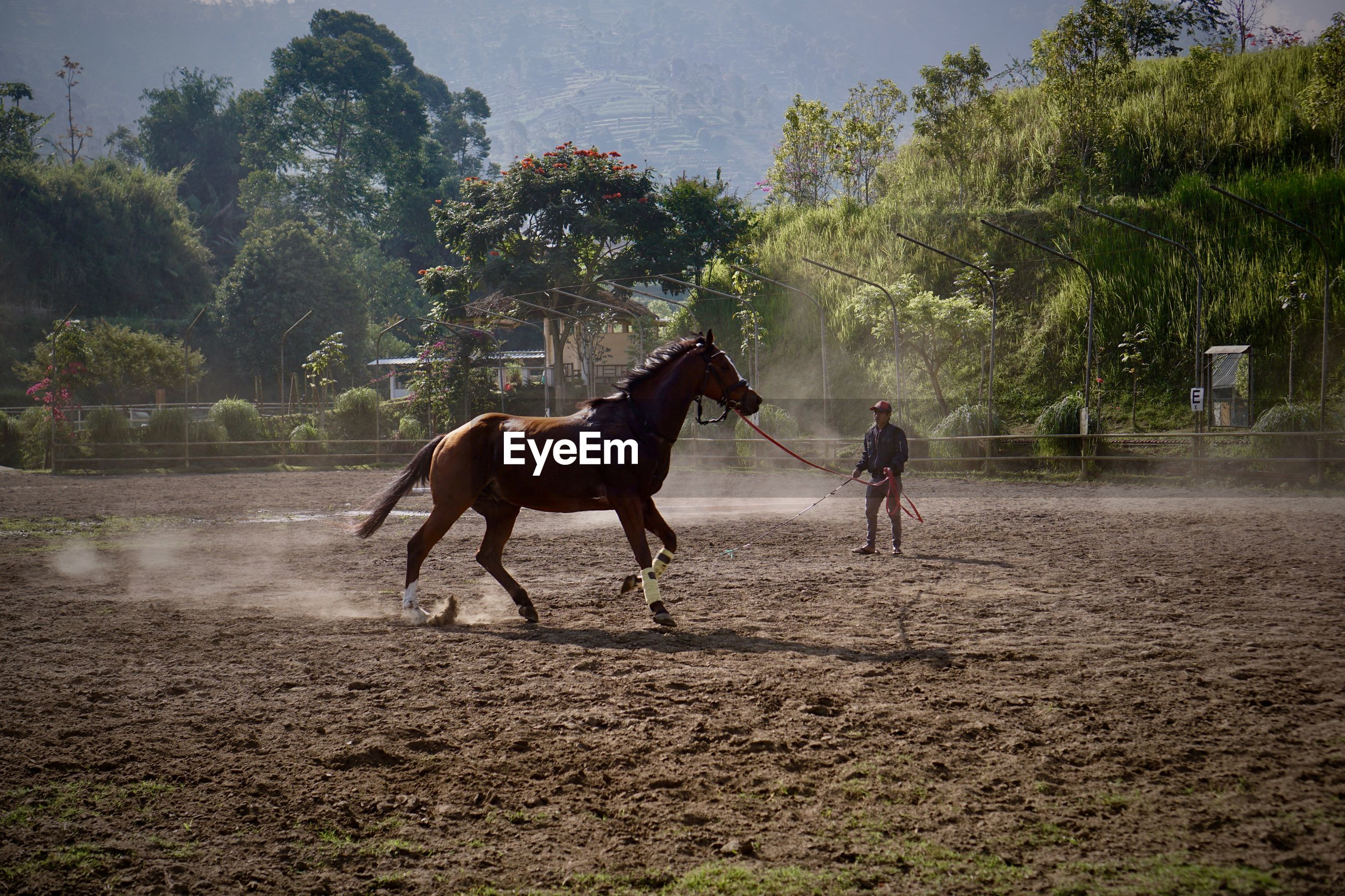 HORSES ON FIELD