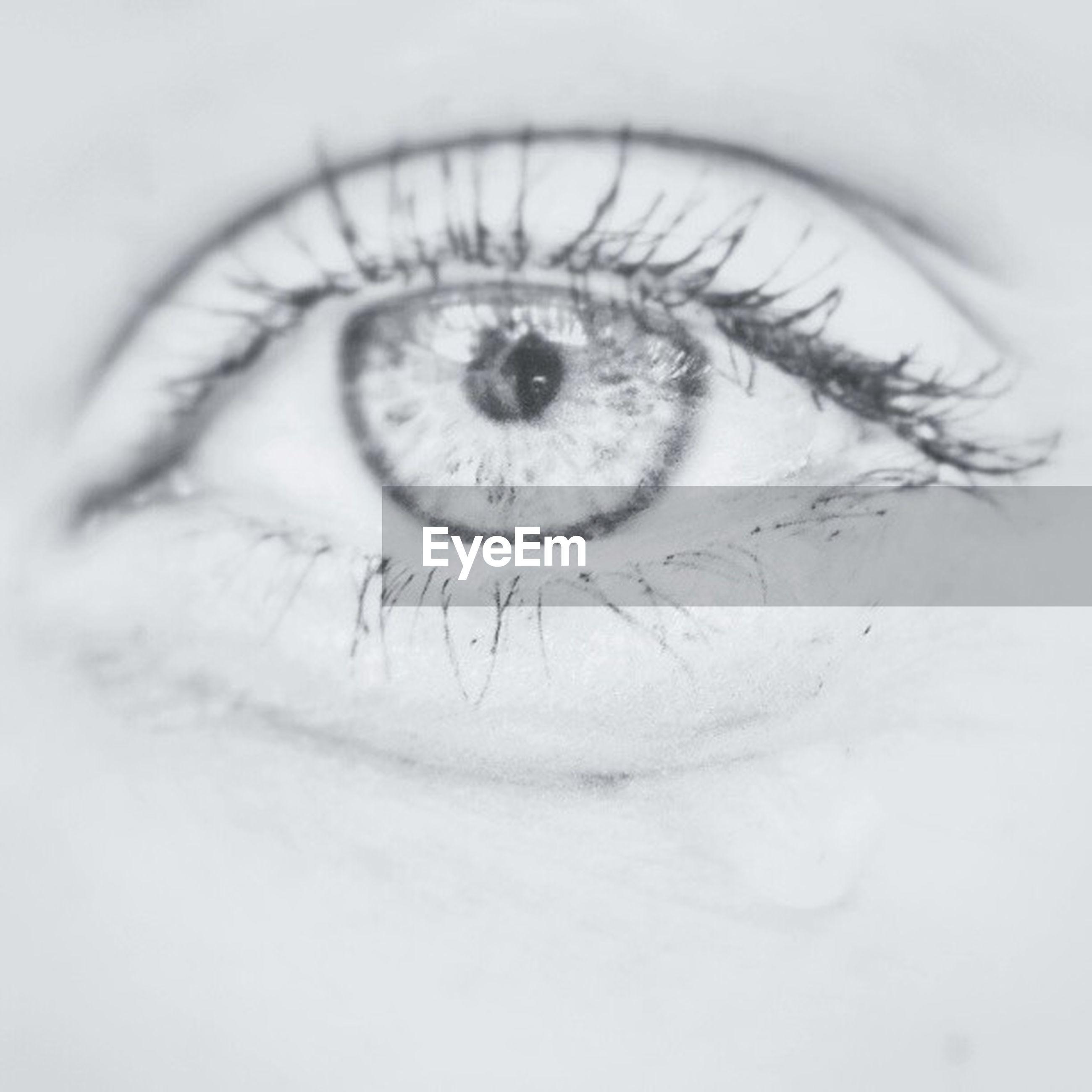 human eye, eyelash, eyesight, close-up, indoors, sensory perception, looking at camera, extreme close-up, portrait, human skin, iris - eye, part of, studio shot, eyeball, white background, human face, vision