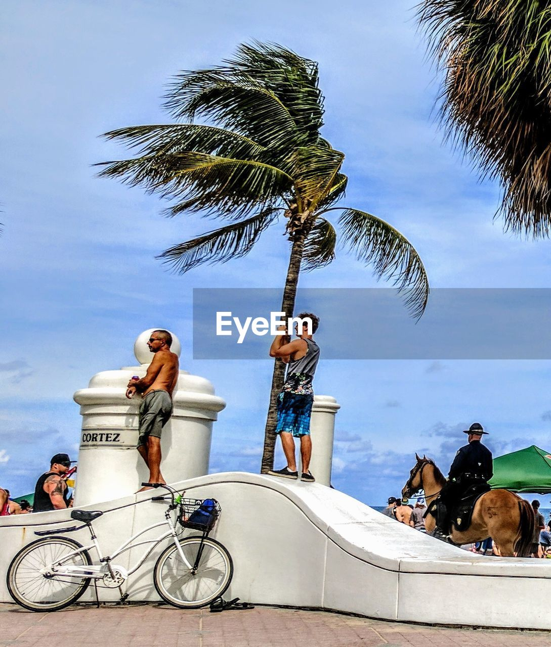 palm tree, tree, real people, transportation, sky, togetherness, day, three people, outdoors, mid adult men, men, leisure activity, riding, lifestyles, mode of transport, vacations, cloud - sky, full length, women, sitting, young adult, domestic animals, young women, friendship, nature, mammal, adult, people