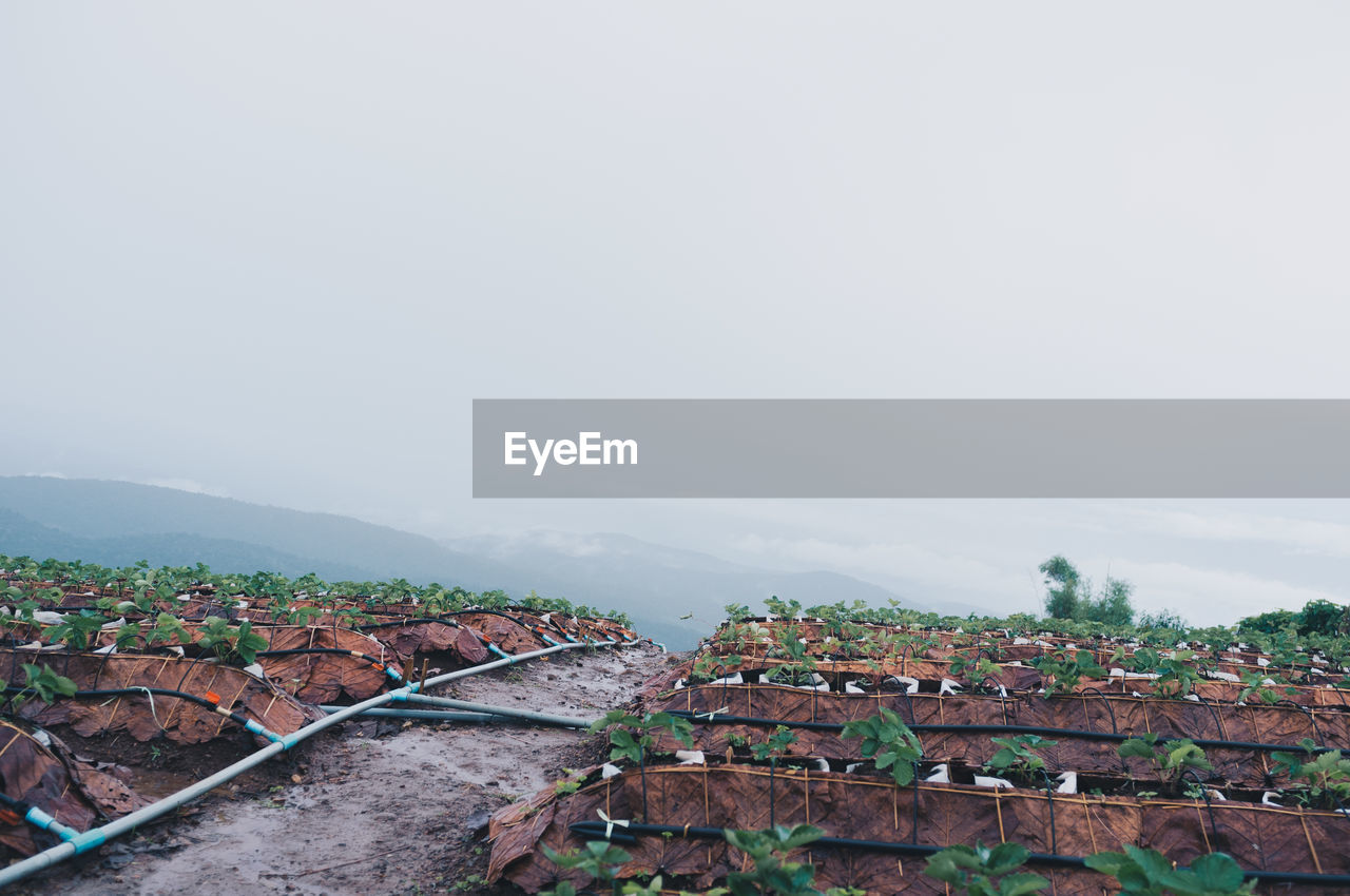 Crops Growing At Farm Against Sky During Foggy Weather