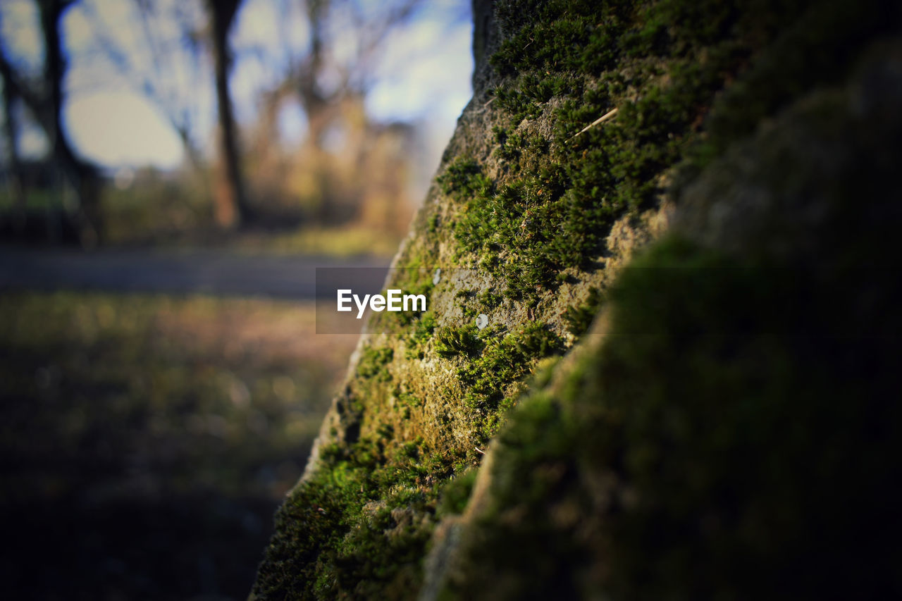 plant, moss, tree, selective focus, growth, nature, no people, tree trunk, trunk, day, close-up, green color, outdoors, textured, beauty in nature, rough, rock, focus on foreground, tranquility, rock - object, bark, lichen