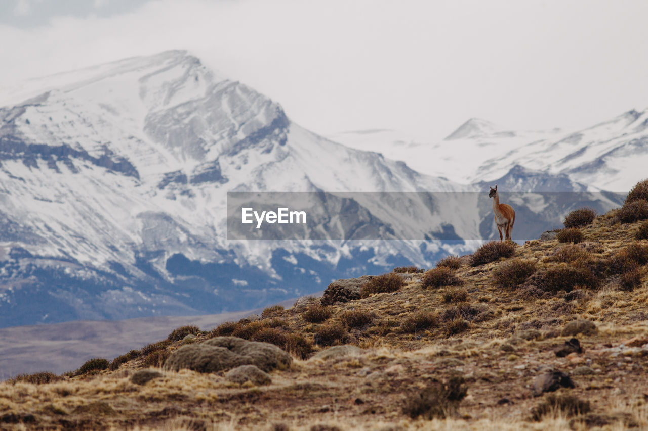 Deer Standing On Snowcapped Mountains Against Sky