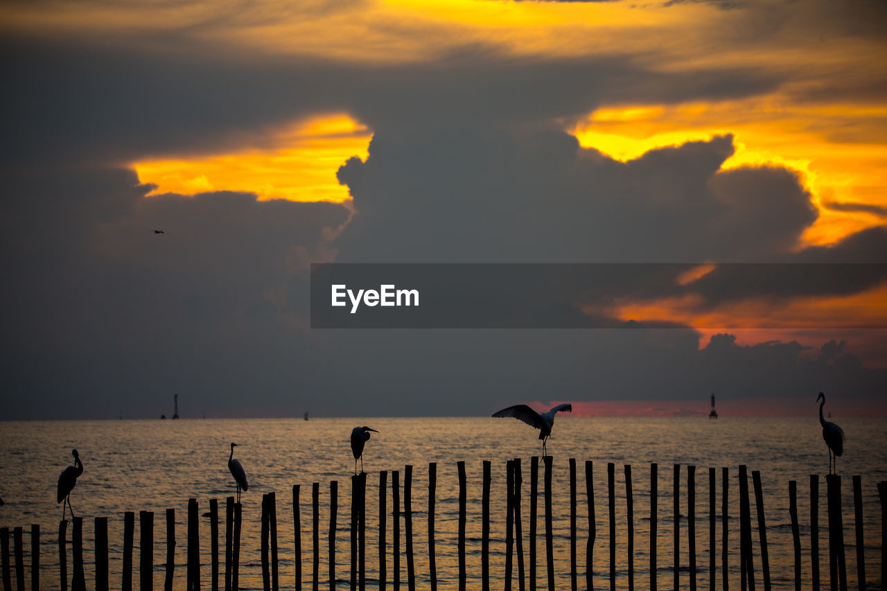sunset, bird, sky, cloud - sky, animal themes, group of animals, vertebrate, animal, animals in the wild, animal wildlife, beauty in nature, orange color, water, sea, scenics - nature, nature, silhouette, perching, horizon over water, no people, outdoors, flock of birds, seagull