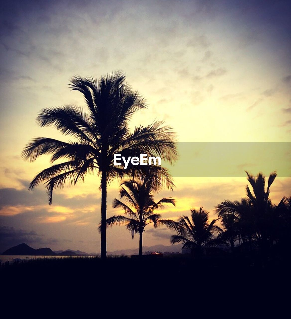 palm tree, tree, sunset, silhouette, beauty in nature, sky, tree trunk, scenics, tranquility, tranquil scene, nature, growth, palm frond, no people, outdoors, cloud - sky, day