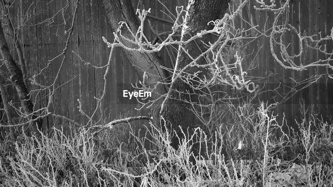 Tree and dry plants on field against wooden wall