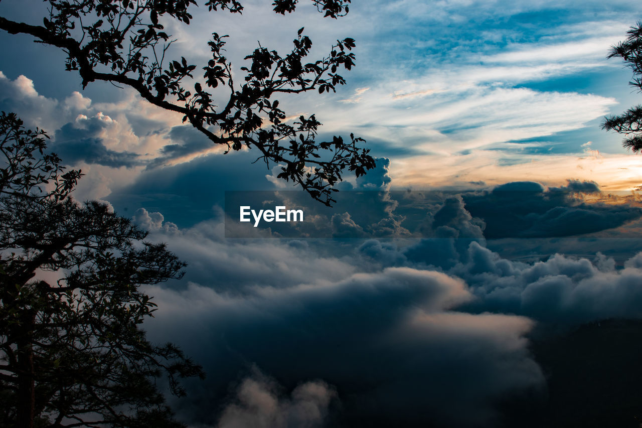 cloud - sky, sky, beauty in nature, scenics - nature, tranquility, sunset, tree, low angle view, tranquil scene, no people, nature, plant, outdoors, cloudscape, idyllic, dramatic sky, day, non-urban scene, silhouette