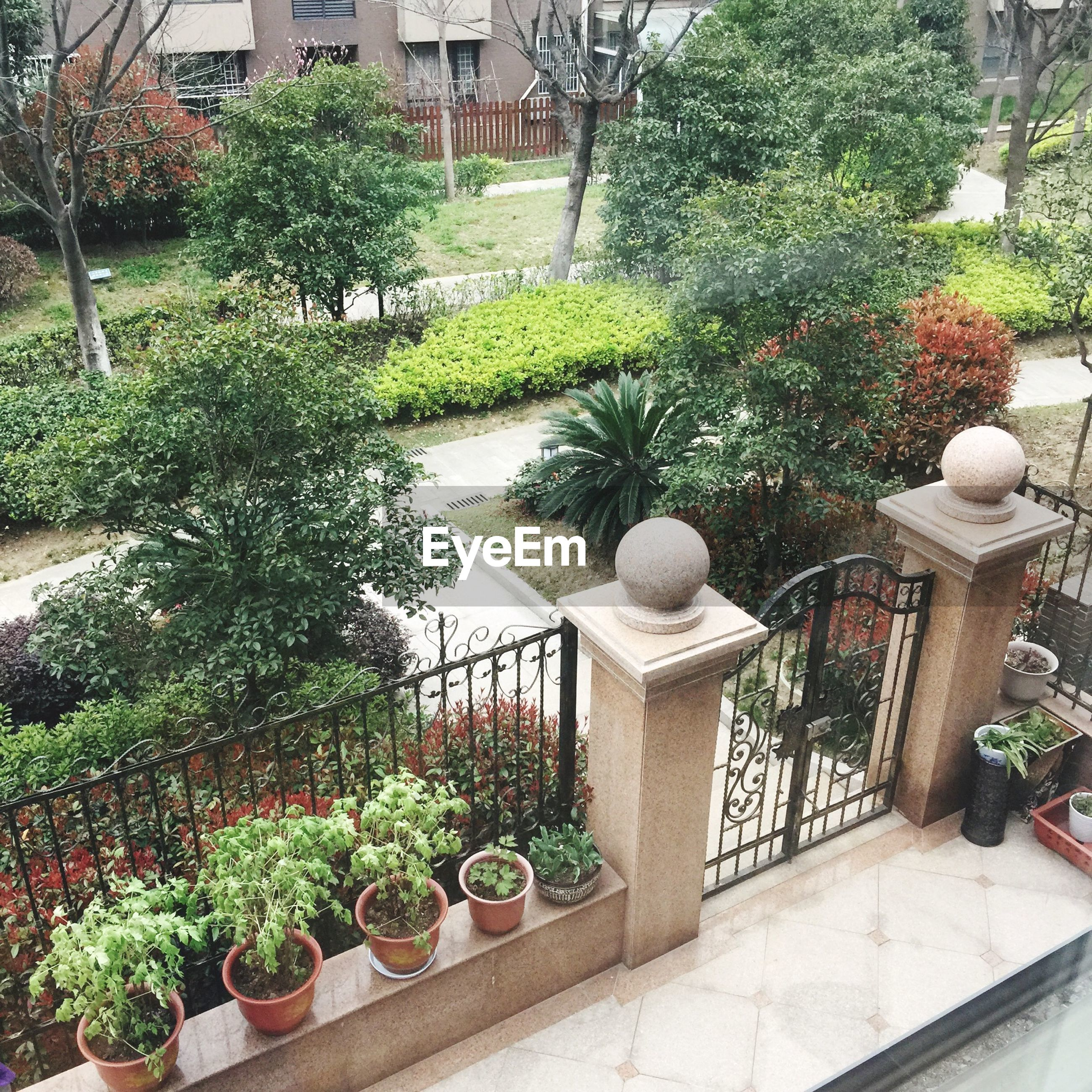 plant, tree, growth, architecture, building exterior, built structure, potted plant, green color, formal garden, railing, city, day, flower pot, hedge, park - man made space, outdoors, steps, flower, leaf, nature