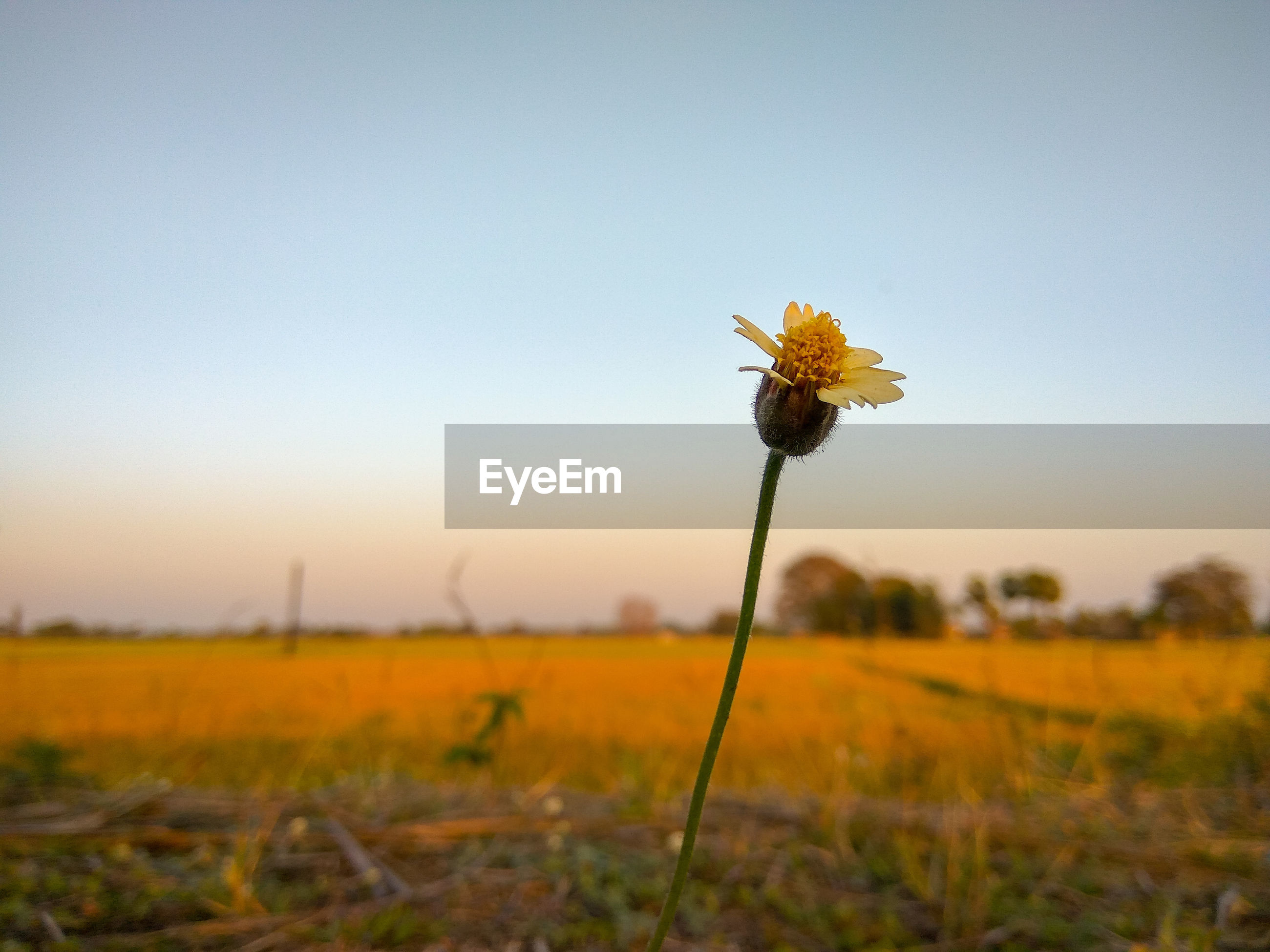YELLOW FLOWERING PLANT ON LAND AGAINST SKY
