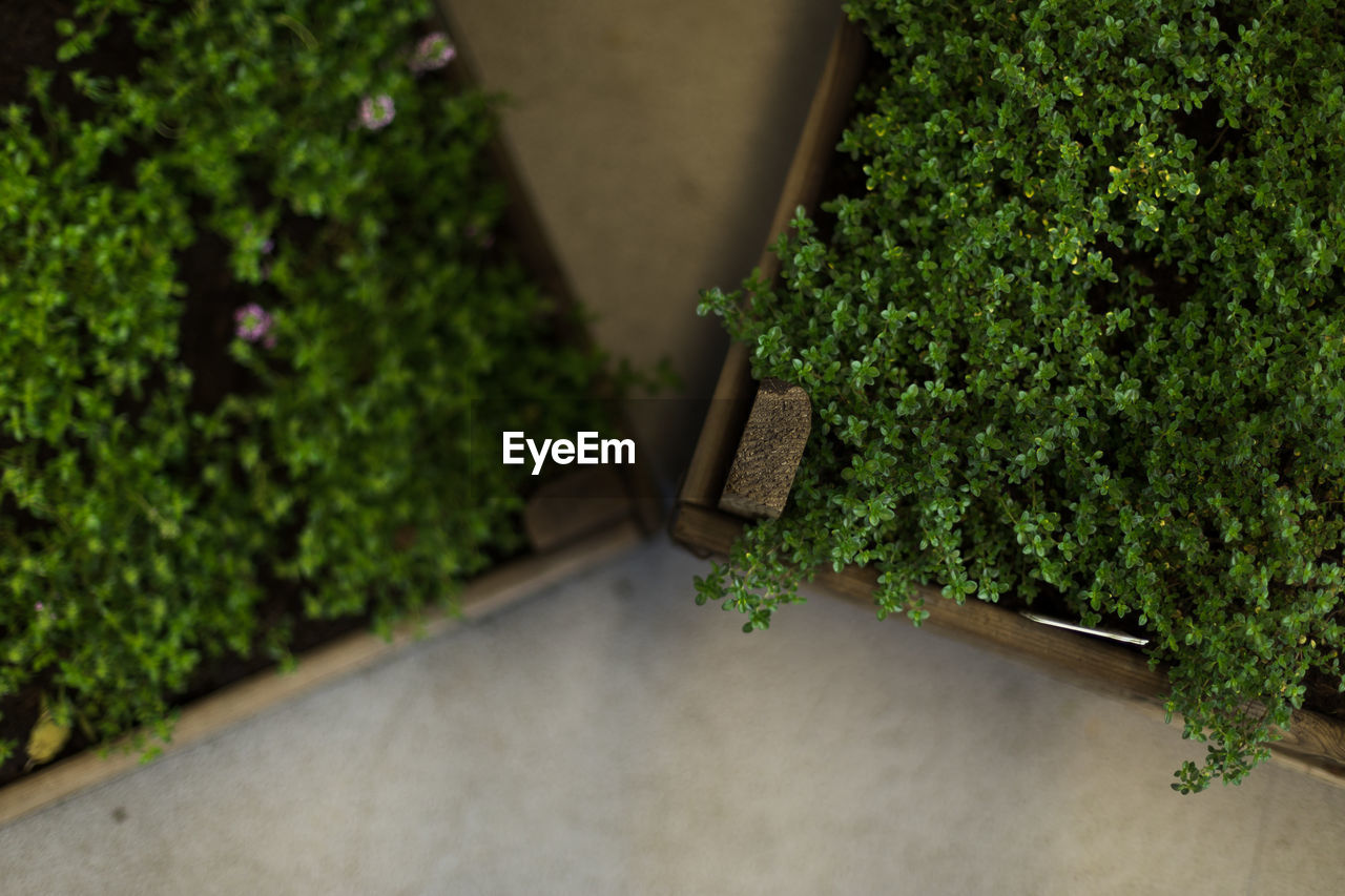 plant, growth, green color, no people, nature, day, tree, outdoors, potted plant, architecture, leaf, plant part, beauty in nature, foliage, wood - material, selective focus, lush foliage, front or back yard, ivy, hedge, houseplant