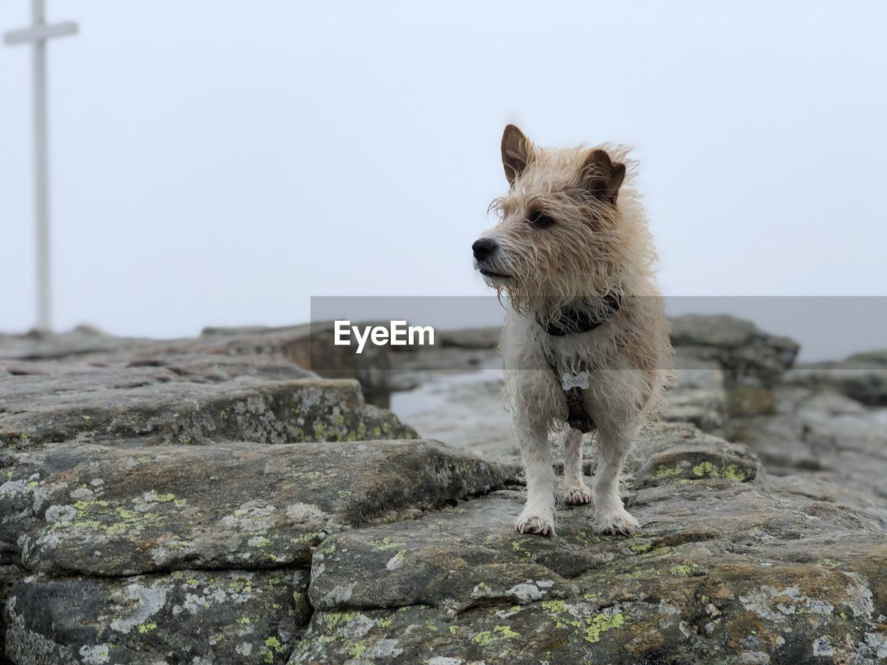 one animal, mammal, animal themes, animal, canine, dog, pets, domestic, domestic animals, vertebrate, solid, looking, sky, selective focus, no people, looking away, rock, rock - object, day, nature