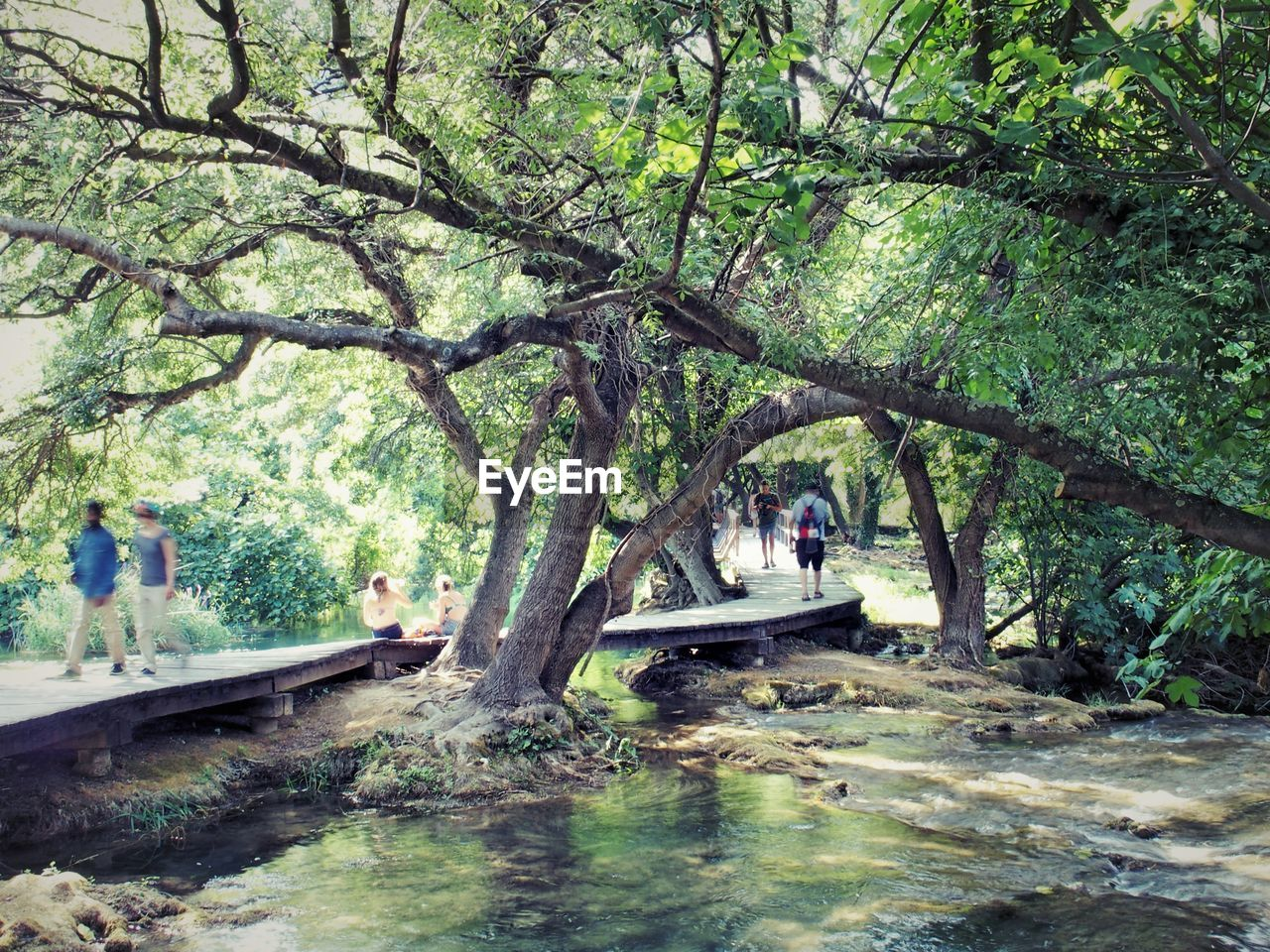 VIEW OF TREES IN RIVER