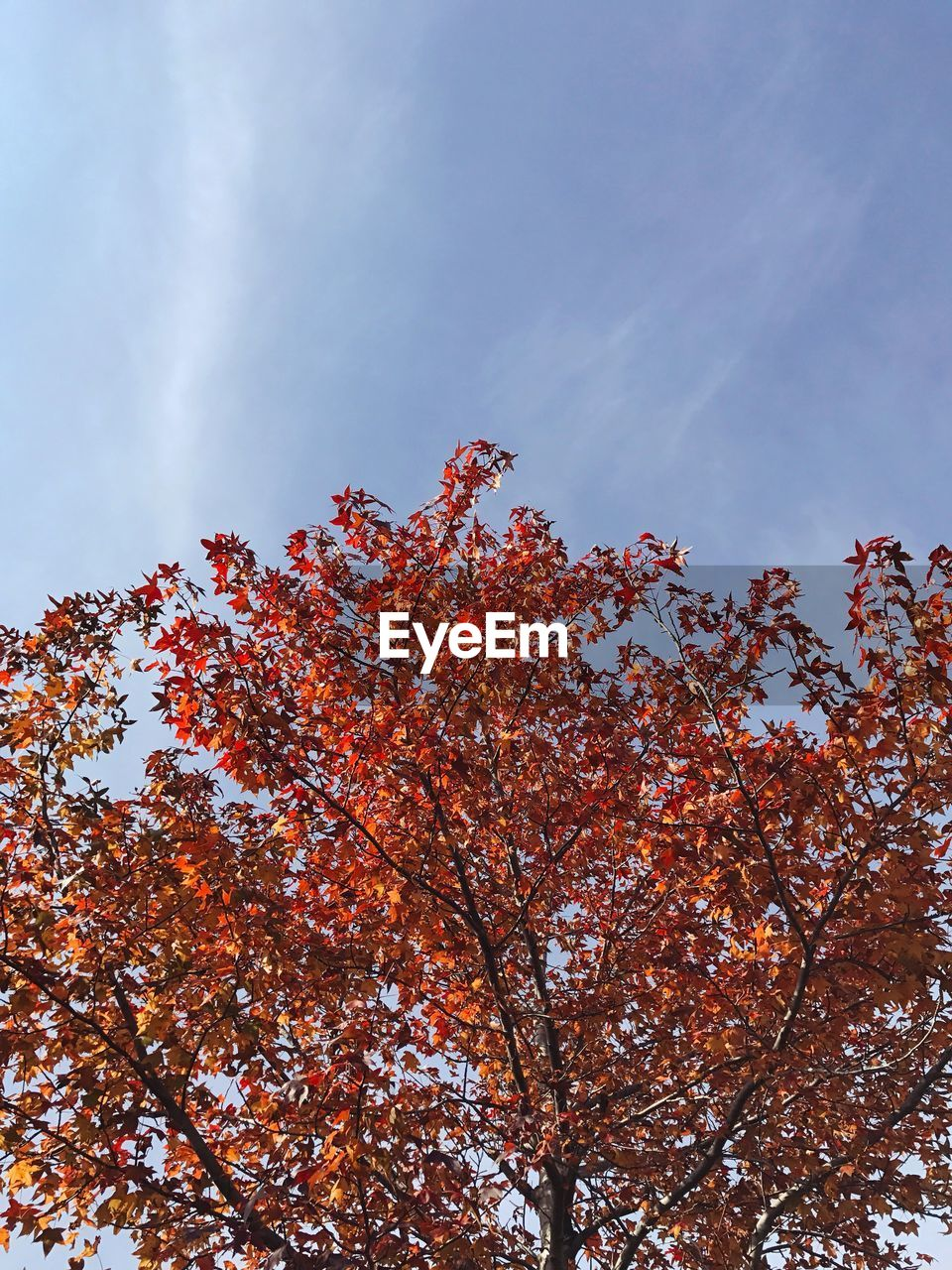 tree, growth, low angle view, nature, beauty in nature, sky, branch, autumn, no people, outdoors, day, change, flower, tranquility, fragility, freshness, close-up