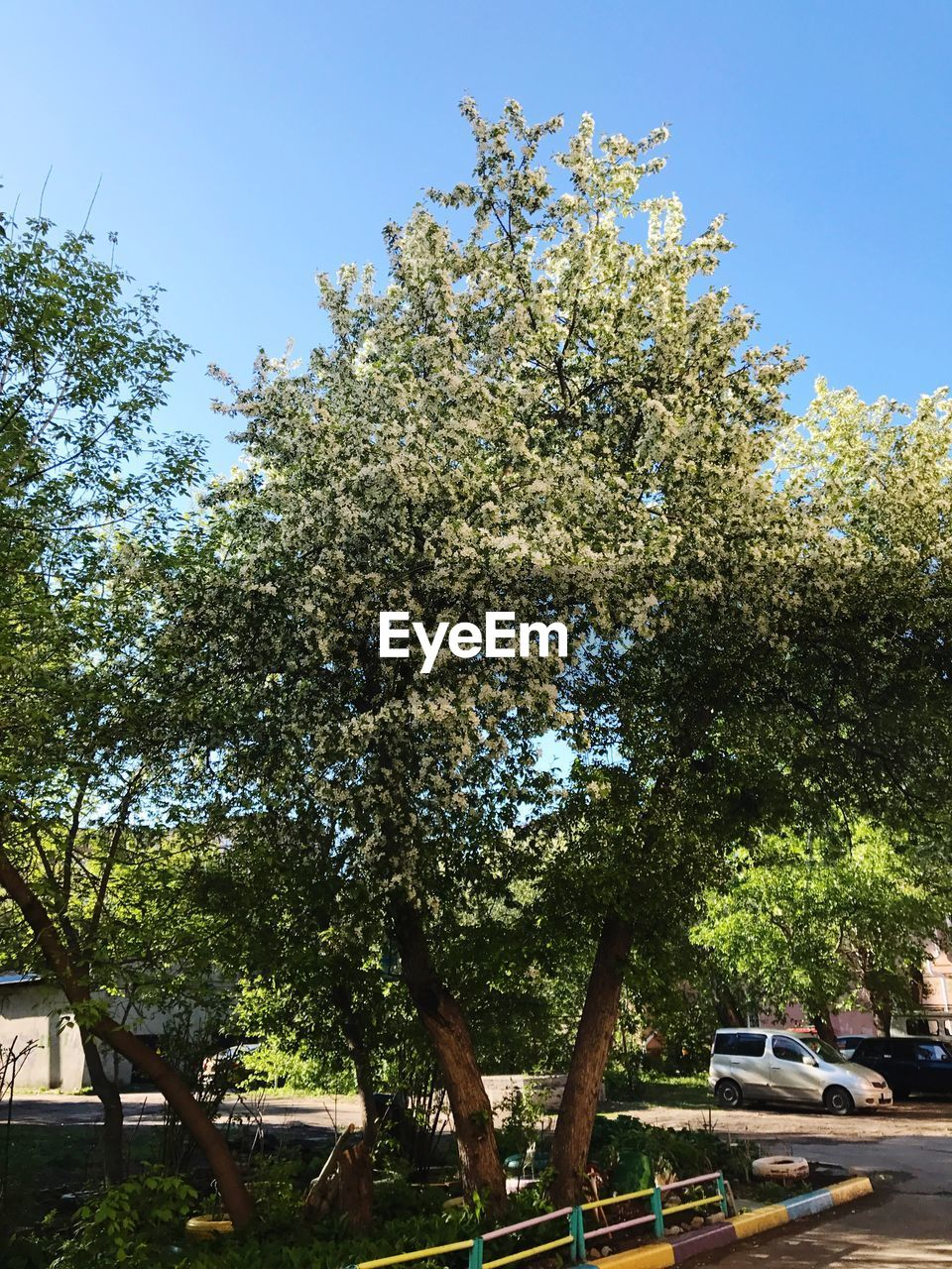 tree, growth, branch, nature, day, no people, beauty in nature, outdoors, flower, clear sky, sky, low angle view