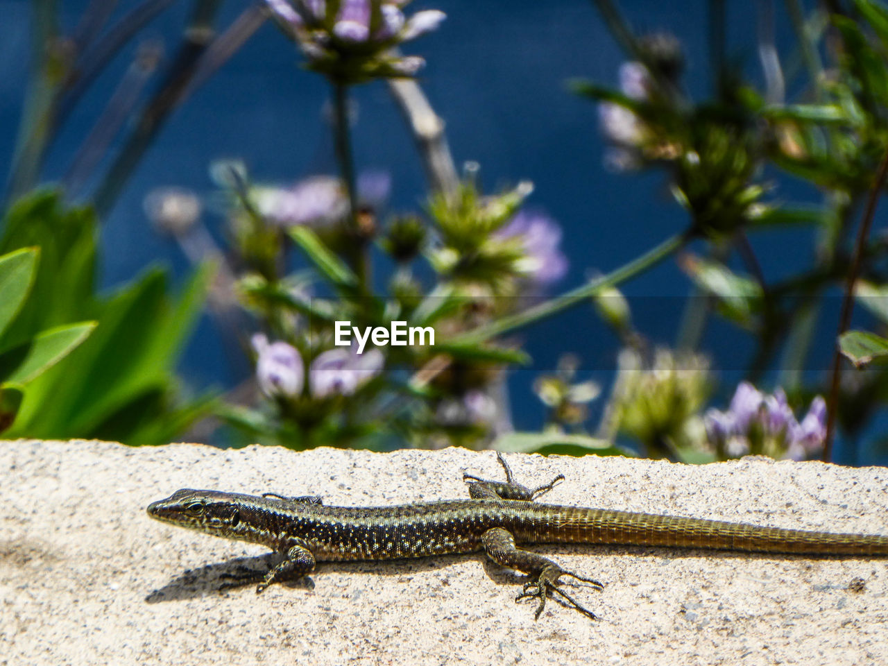 one animal, animal, animal themes, animal wildlife, reptile, animals in the wild, vertebrate, lizard, nature, sunlight, day, no people, focus on foreground, close-up, plant, outdoors, solid, zoology, rock, growth