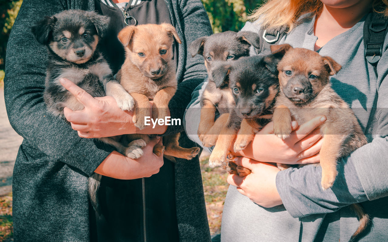 Midsection of women holding puppies while standing outdoors