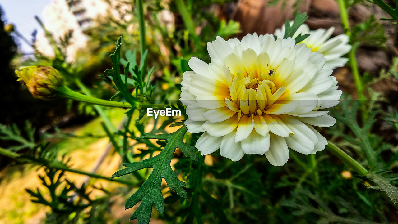 flower, freshness, beauty in nature, fragility, petal, nature, flower head, yellow, growth, plant, focus on foreground, close-up, outdoors, day, blooming, no people, animal themes
