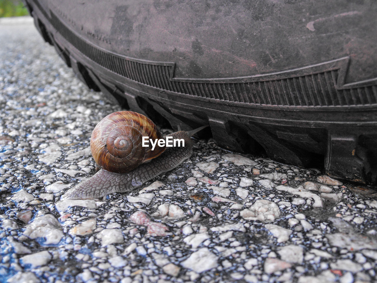 mollusk, animal themes, animal wildlife, animal, gastropod, snail, one animal, invertebrate, shell, animal shell, animals in the wild, day, close-up, no people, animal body part, transportation, nature, outdoors, street, selective focus, small, surface level