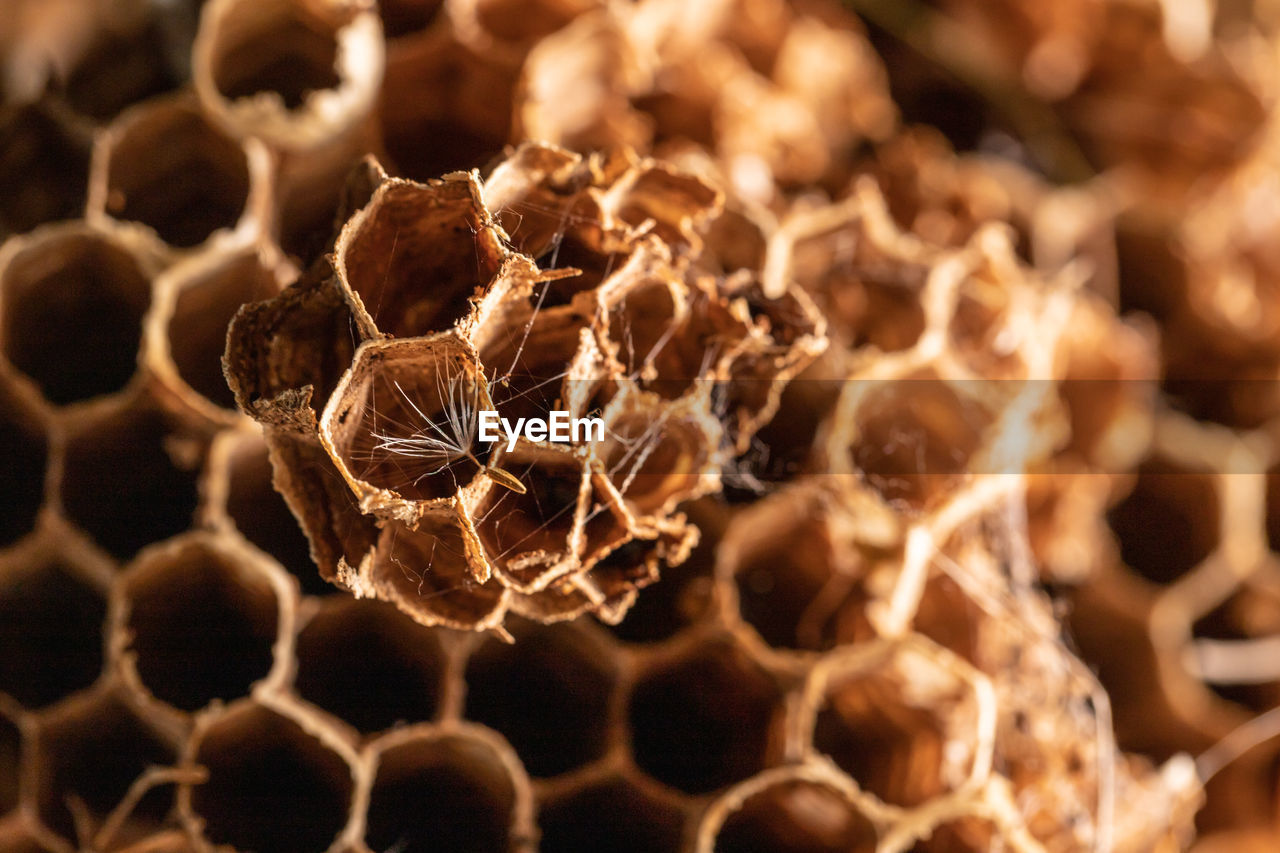honeycomb, close-up, selective focus, no people, focus on foreground, apiculture, beehive, insect, invertebrate, pattern, hexagon, brown, day, nature, bee, natural pattern, shape, animal, animal themes, dry