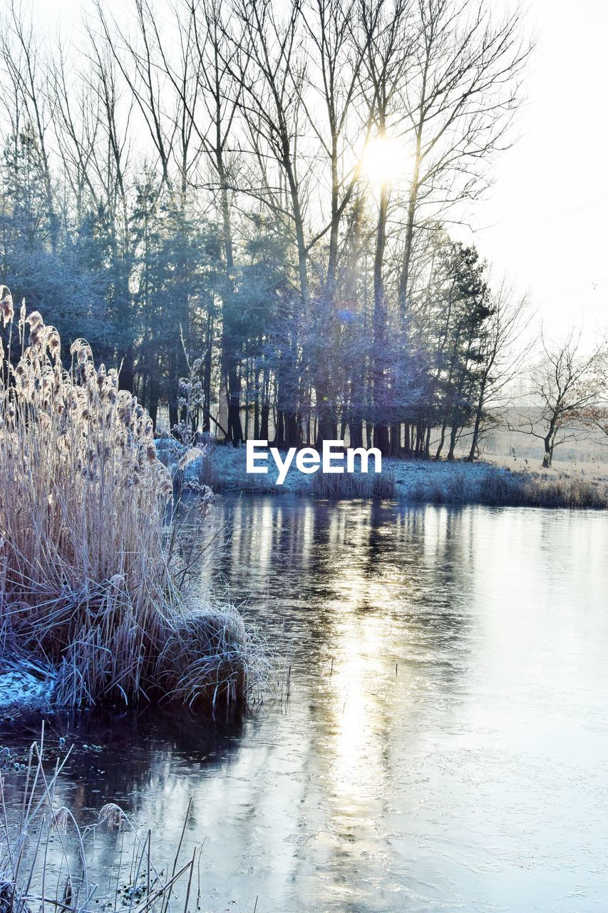 water, tree, bare tree, plant, tranquility, winter, cold temperature, nature, reflection, tranquil scene, beauty in nature, no people, scenics - nature, river, snow, waterfront, sky, outdoors, flowing water