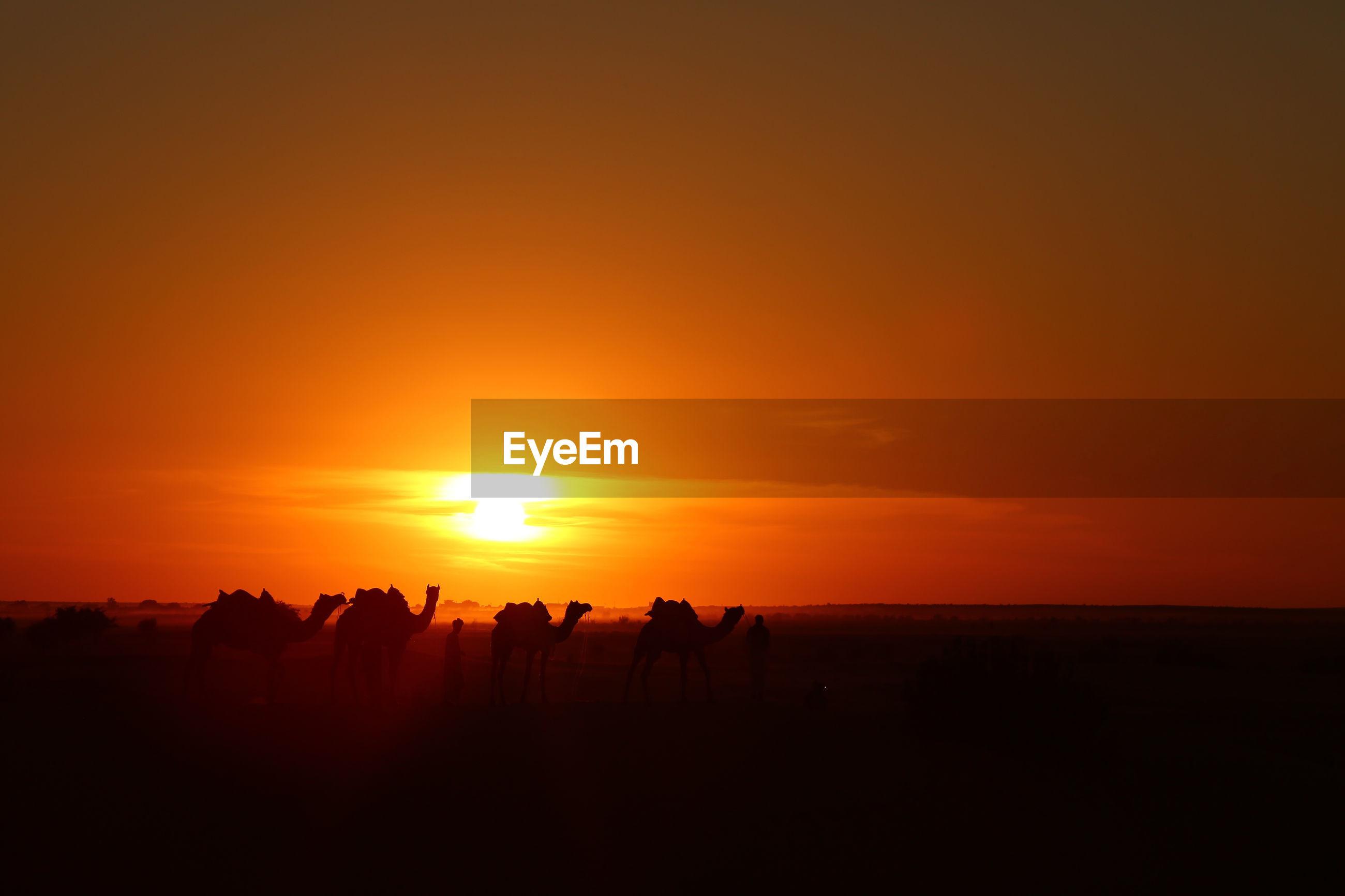 Camels on landscape against sky