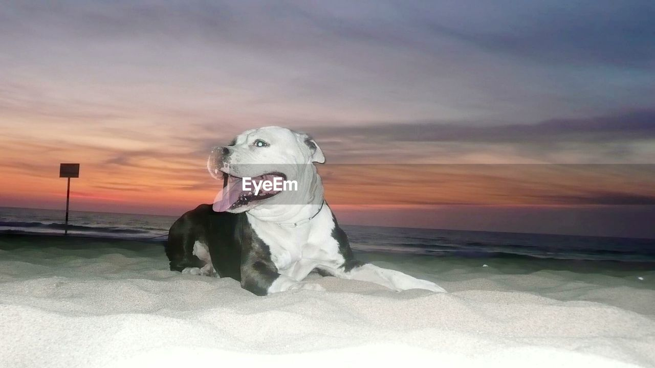 dog, pets, domestic animals, one animal, sky, animal themes, nature, sea, sunset, cloud - sky, mammal, outdoors, horizon over water, water, no people, beach, sitting, day, beauty in nature
