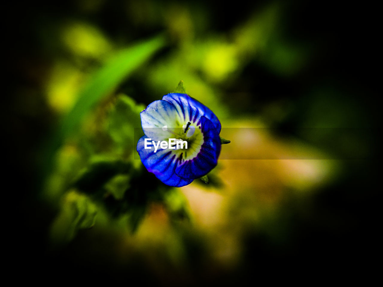 flower, flowering plant, plant, freshness, beauty in nature, close-up, vulnerability, growth, petal, fragility, inflorescence, flower head, no people, nature, purple, selective focus, focus on foreground, day, botany, outdoors, pollen
