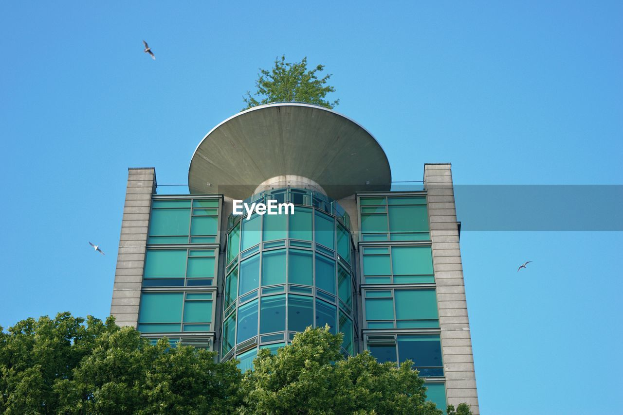 built structure, building exterior, architecture, sky, tree, bird, low angle view, animal themes, blue, vertebrate, nature, animal, clear sky, plant, flying, animal wildlife, day, animals in the wild, no people, building, modern, outdoors, office building exterior