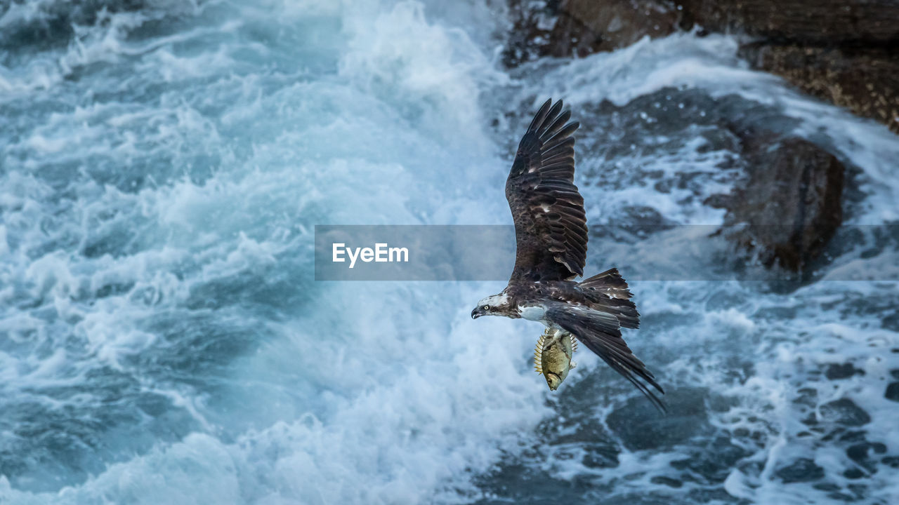 High Angle View Of Eagle Flying Over Sea