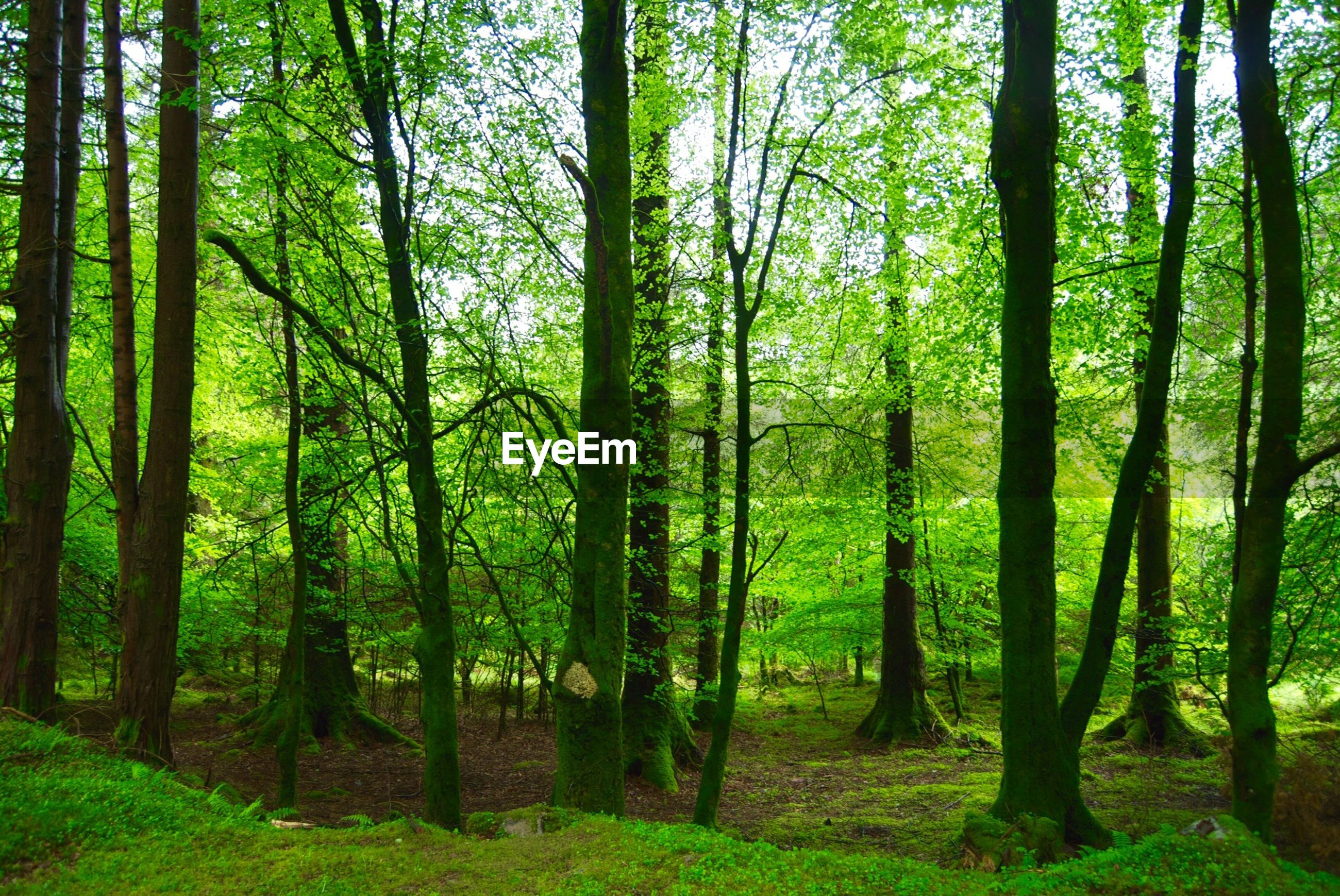 View of lush trees in the forest