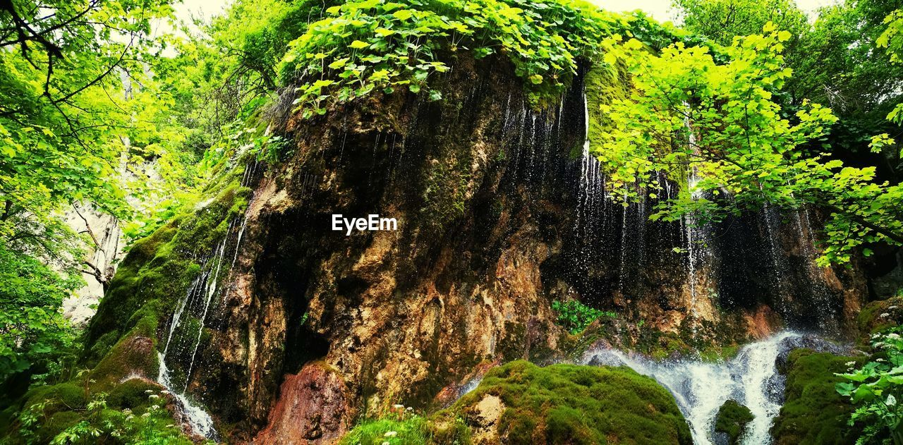 tree, plant, forest, beauty in nature, water, land, growth, nature, scenics - nature, waterfall, green color, motion, foliage, lush foliage, day, no people, tranquility, tree trunk, non-urban scene, outdoors, flowing water, rainforest, flowing, woodland, power in nature, bark