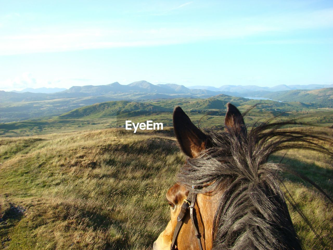 Rear view of horse by landscape against sky