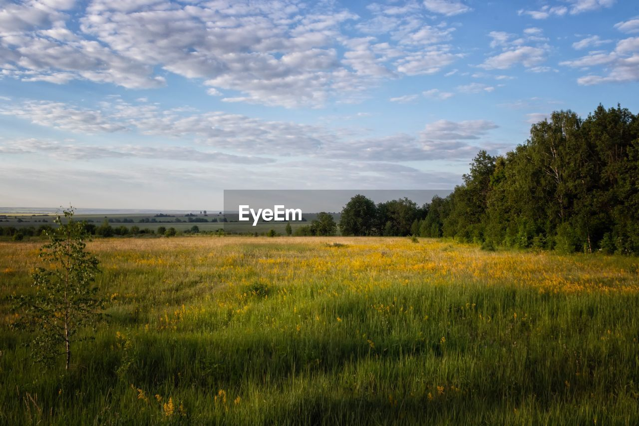 environment, landscape, sky, plant, field, land, grass, cloud - sky, tranquility, growth, beauty in nature, tranquil scene, tree, nature, scenics - nature, green color, no people, non-urban scene, rural scene, outdoors