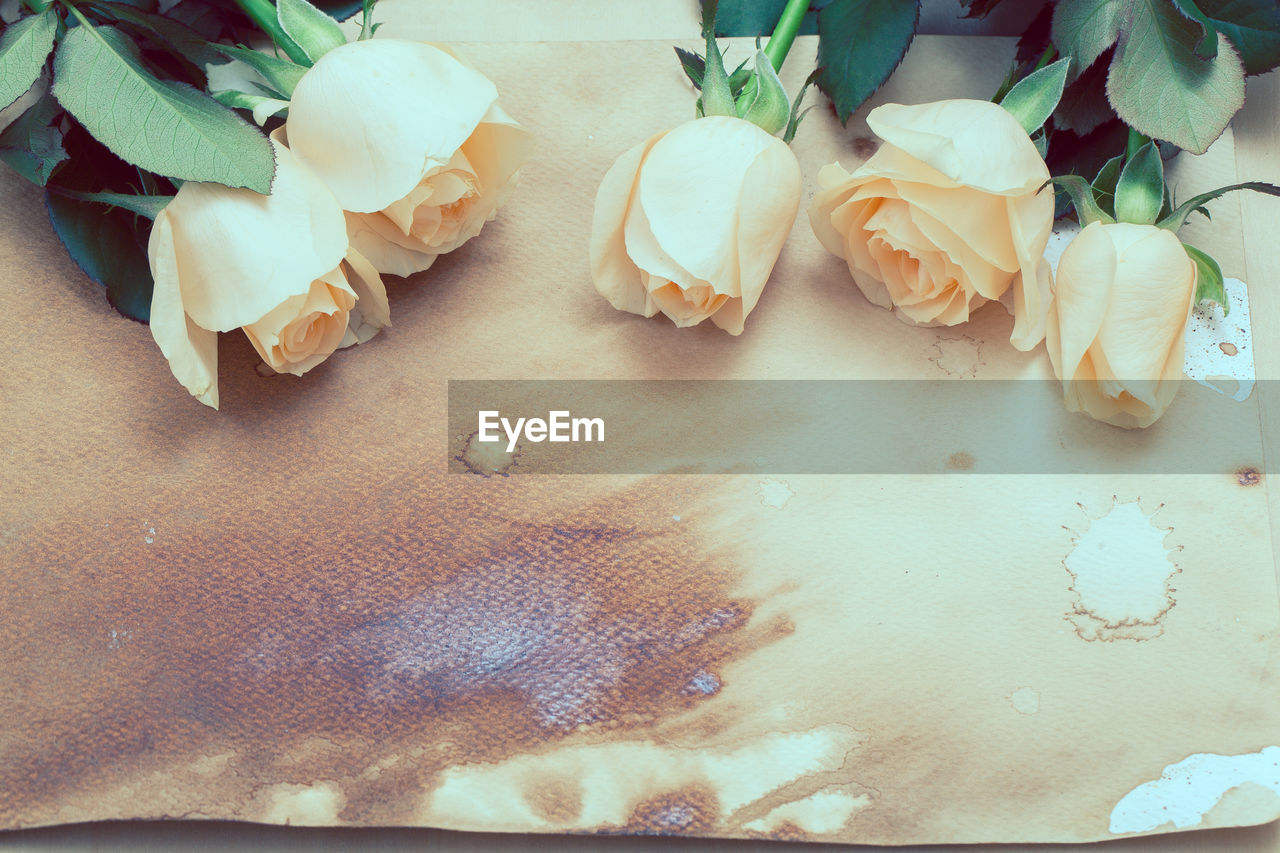 freshness, indoors, close-up, beauty in nature, no people, plant, high angle view, flower, flowering plant, table, rose, still life, food, rose - flower, food and drink, petal, inflorescence, fragility, nature, vulnerability, flower head, temptation