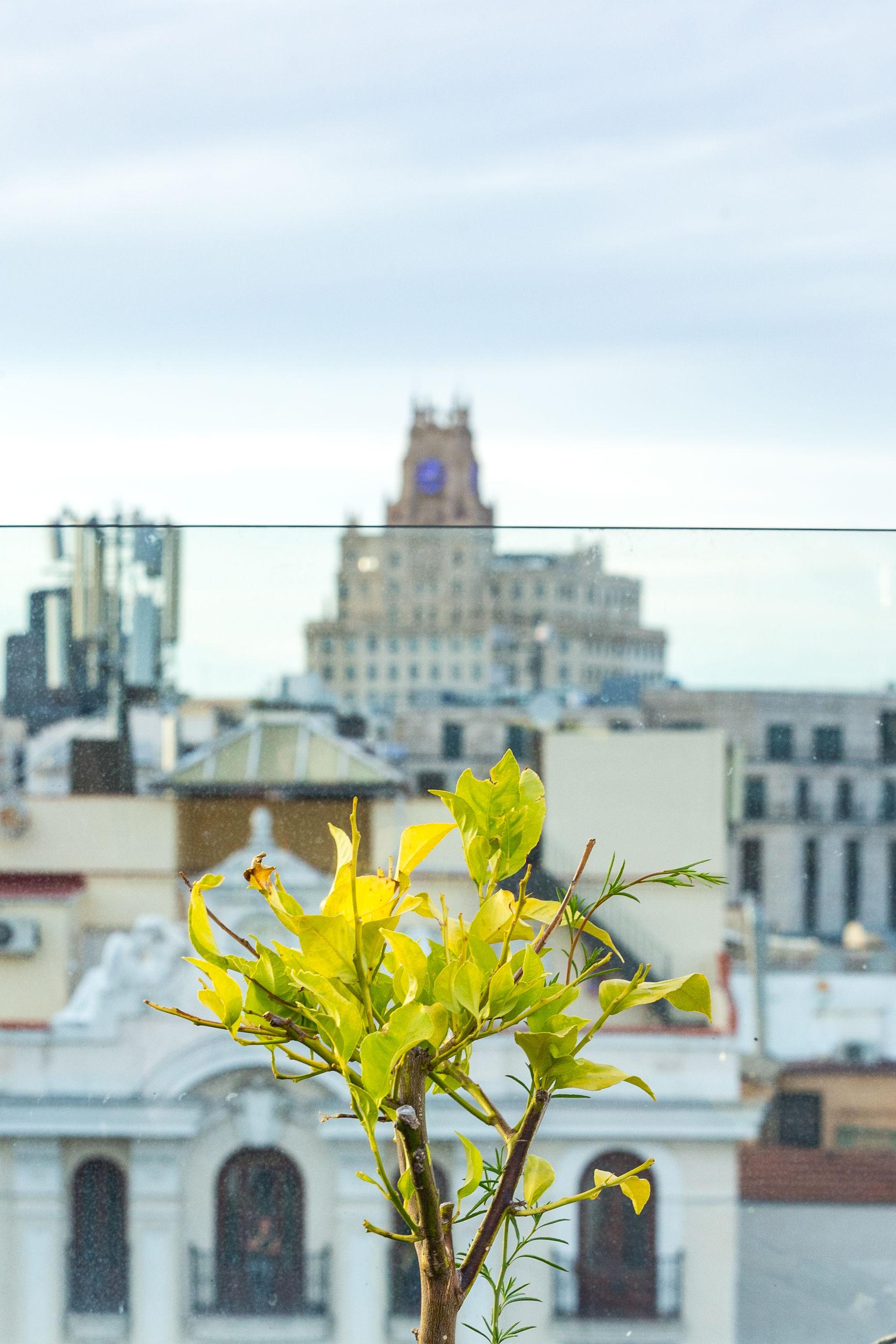 YELLOW FLOWERING PLANT AGAINST BUILDINGS