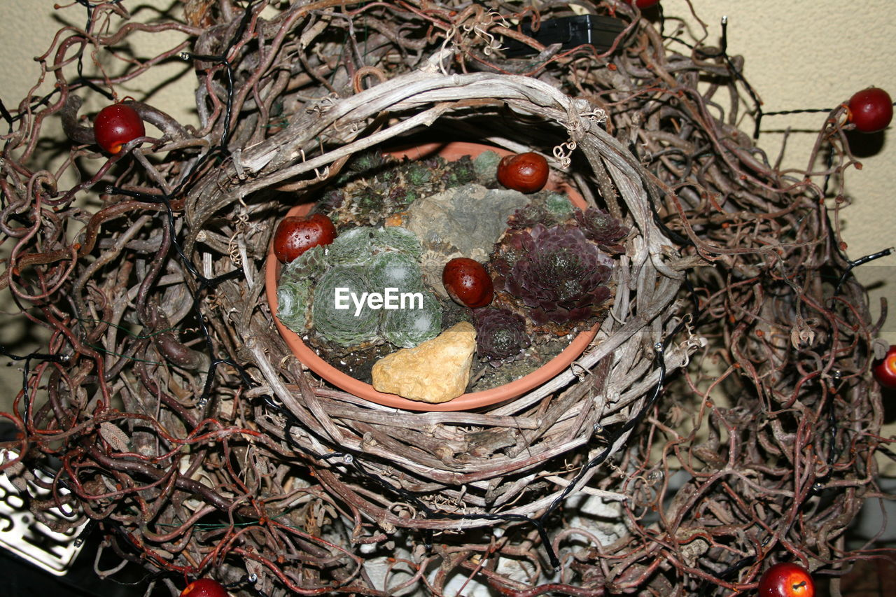 bird nest, high angle view, no people, day, close-up, outdoors, robin, nature, bird, fragility