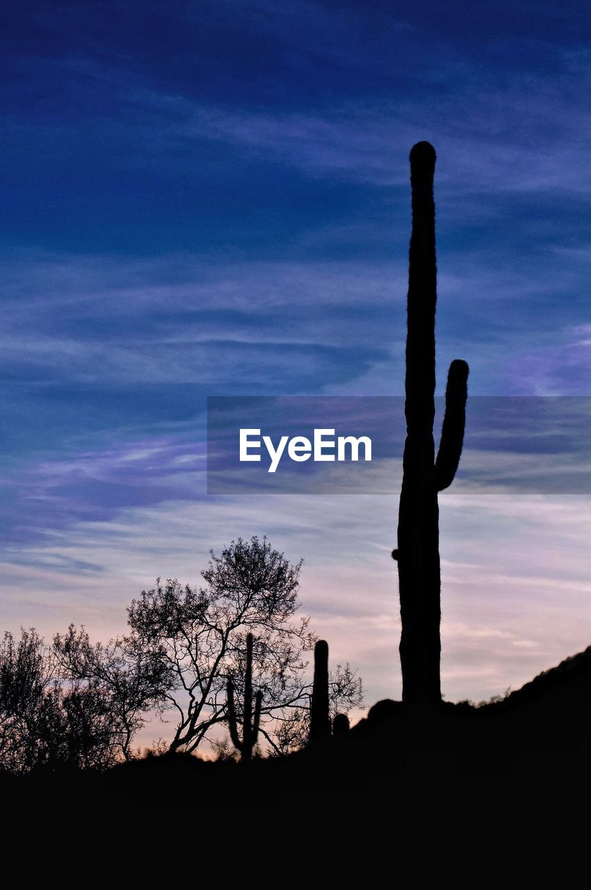 silhouette, sky, sunset, tranquility, tranquil scene, nature, no people, scenics, tree, beauty in nature, outdoors, landscape, saguaro cactus, day