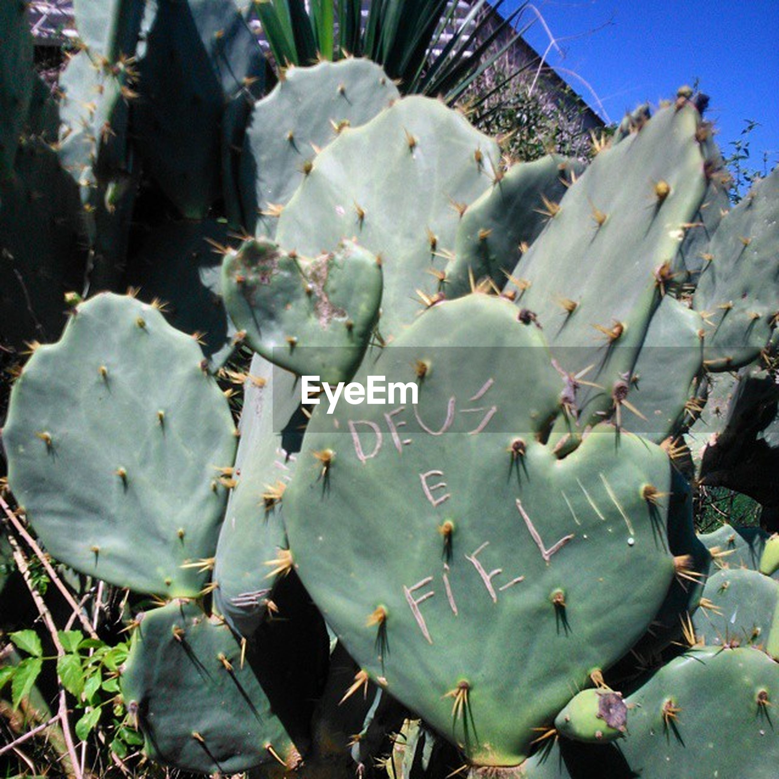 growth, nature, plant, close-up, leaf, field, flower, fragility, beauty in nature, day, freshness, outdoors, sunlight, no people, cactus, focus on foreground, petal, green color, natural pattern, tranquility