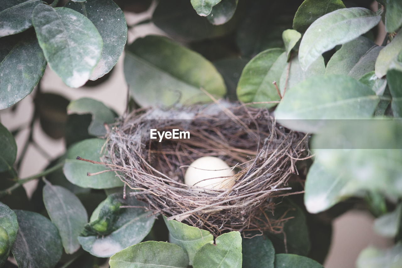 leaf, animal nest, plant part, egg, animal egg, bird nest, nature, no people, beginnings, bird, new life, plant, day, high angle view, food, food and drink, vulnerability, close-up, fragility, growth, outdoors, nest egg