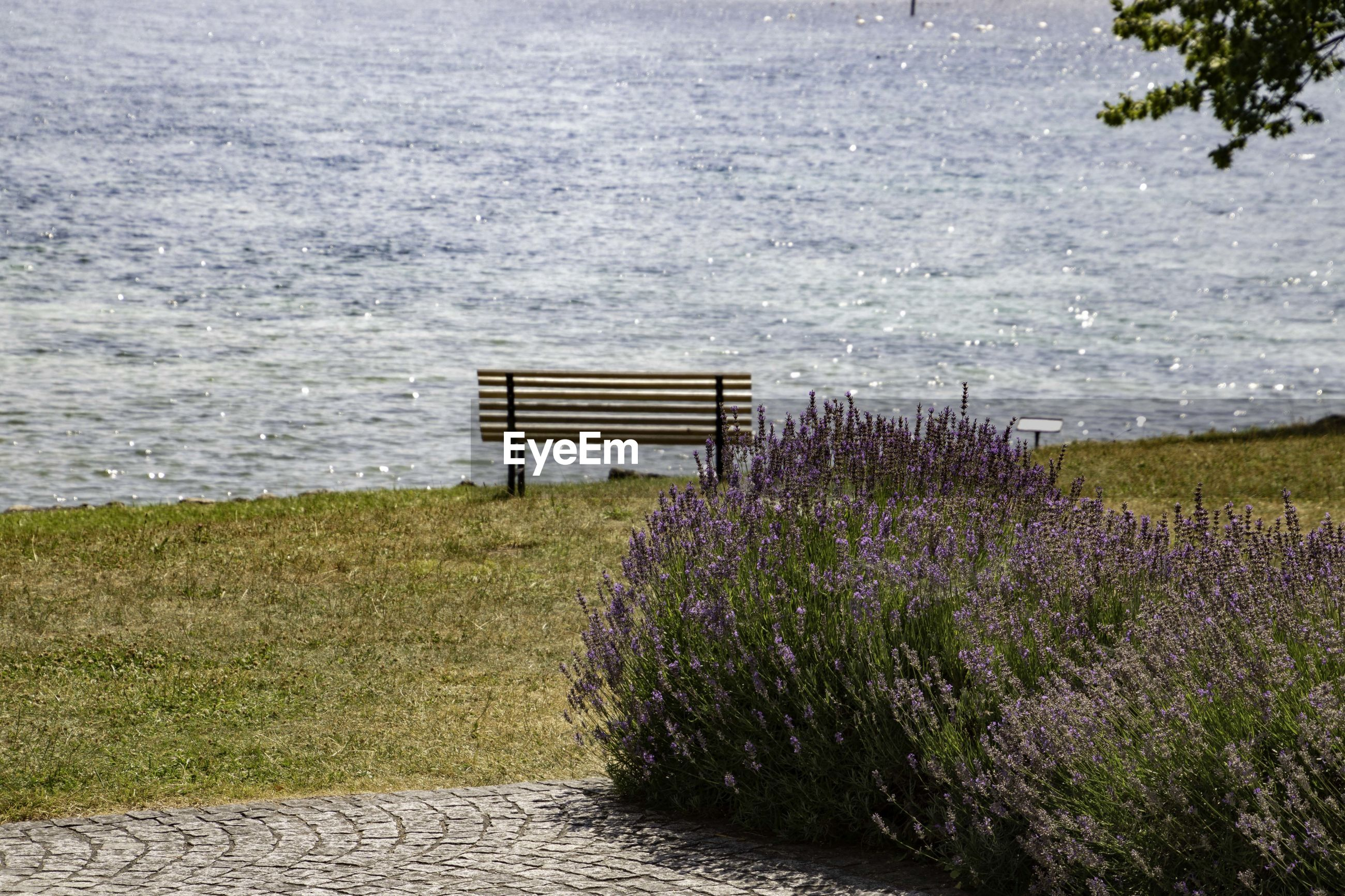 VIEW OF BENCH AND PURPLE FLOWERING PLANTS IN LAKE