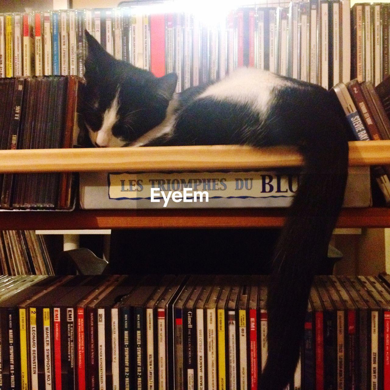 Cat relaxing on bookshelf
