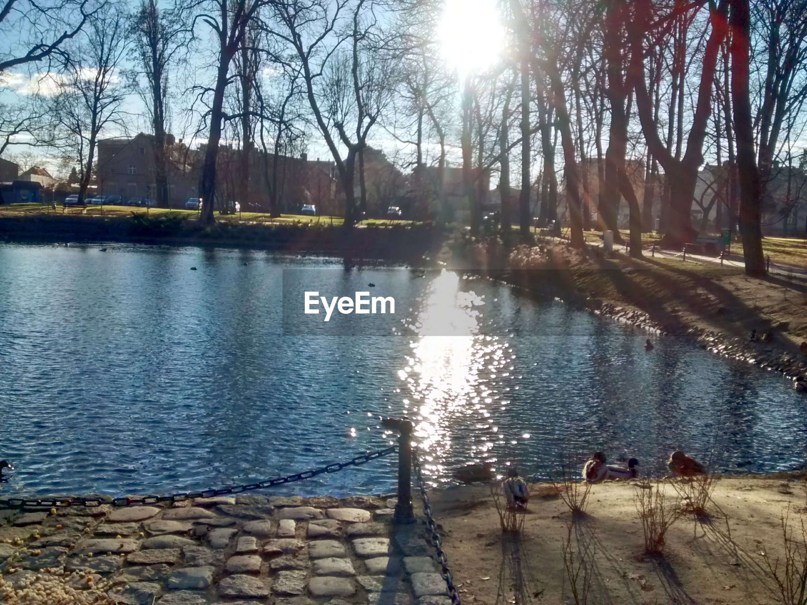 water, tree, sunlight, bare tree, lifestyles, sun, leisure activity, reflection, men, lake, nature, animal themes, river, person, outdoors, sky, lakeshore, sunbeam, beauty in nature